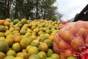 Elfruto del campo llega directo a nuestras plantas procesadoras de frutas