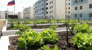 agricultura-urbana